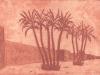 palmeres